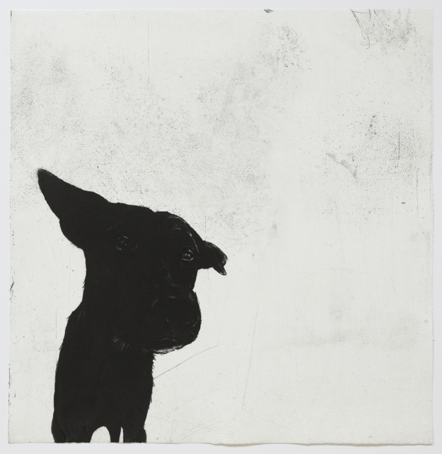 © 2016, Deborah Williams,  Survey,  etching, engraving, roulette and drypoint intaglio, 56.5 x 55 cm, edition of 20