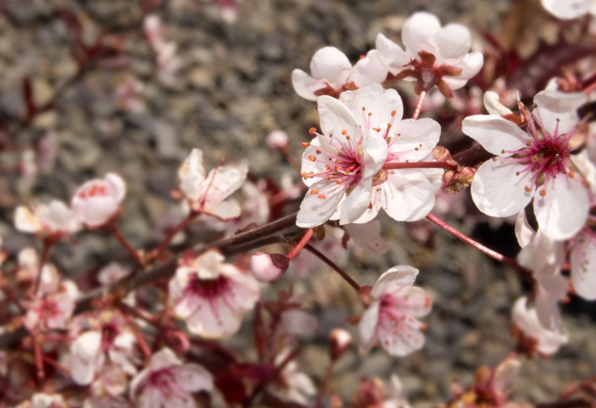 © 2017 Louise Levergneux, Spring around Avimor in Boise, Idaho