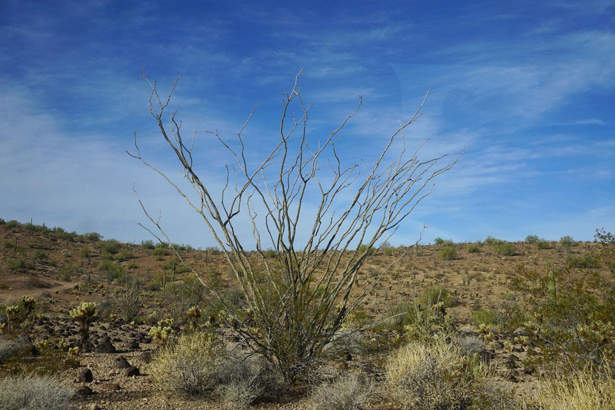 © 2018 Louise Levergneux. Sonoran Desert, Arizona. /  Le Désert de Sonora en Arizona.