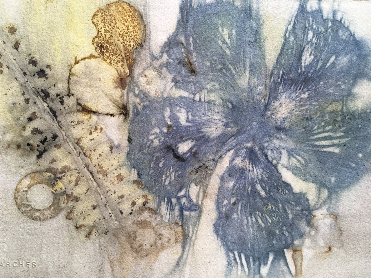 © 2019 Merike van Zanten. Hibiscus and fern print on paper from Merike's residency.
