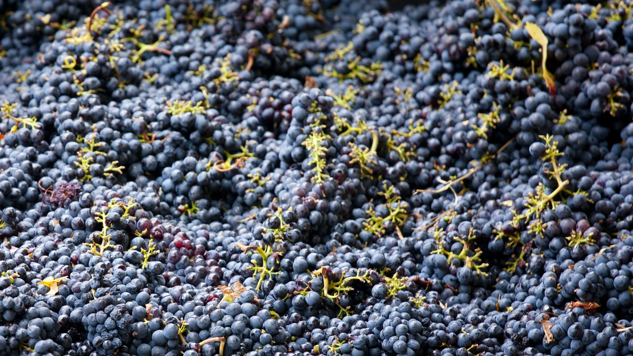 What Is Carbonic Maceration in Wine, and Why Does It Taste So Damn Fun?  Bon Appétit