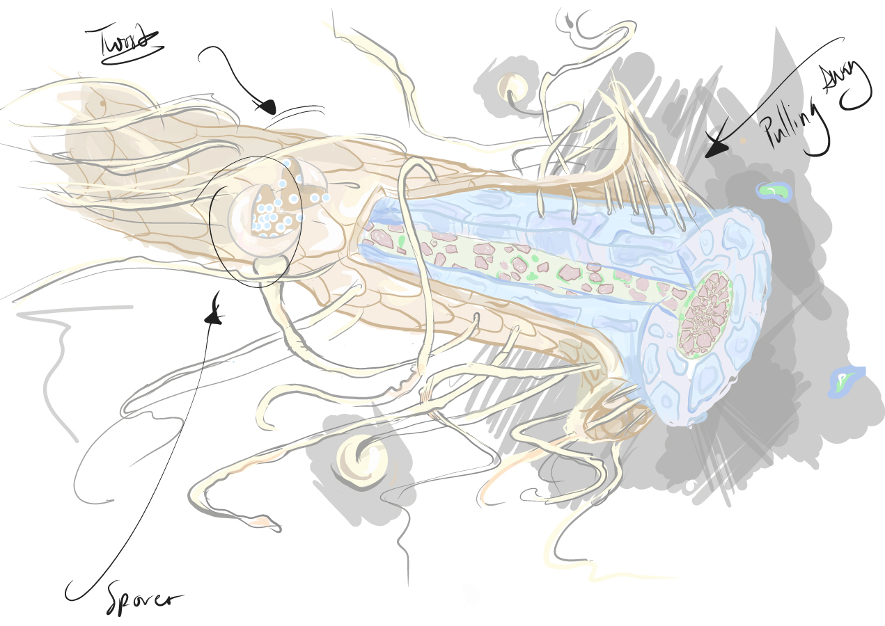 Mycorrhizal-Plant-Root-Sketch_180809-copy.jpg