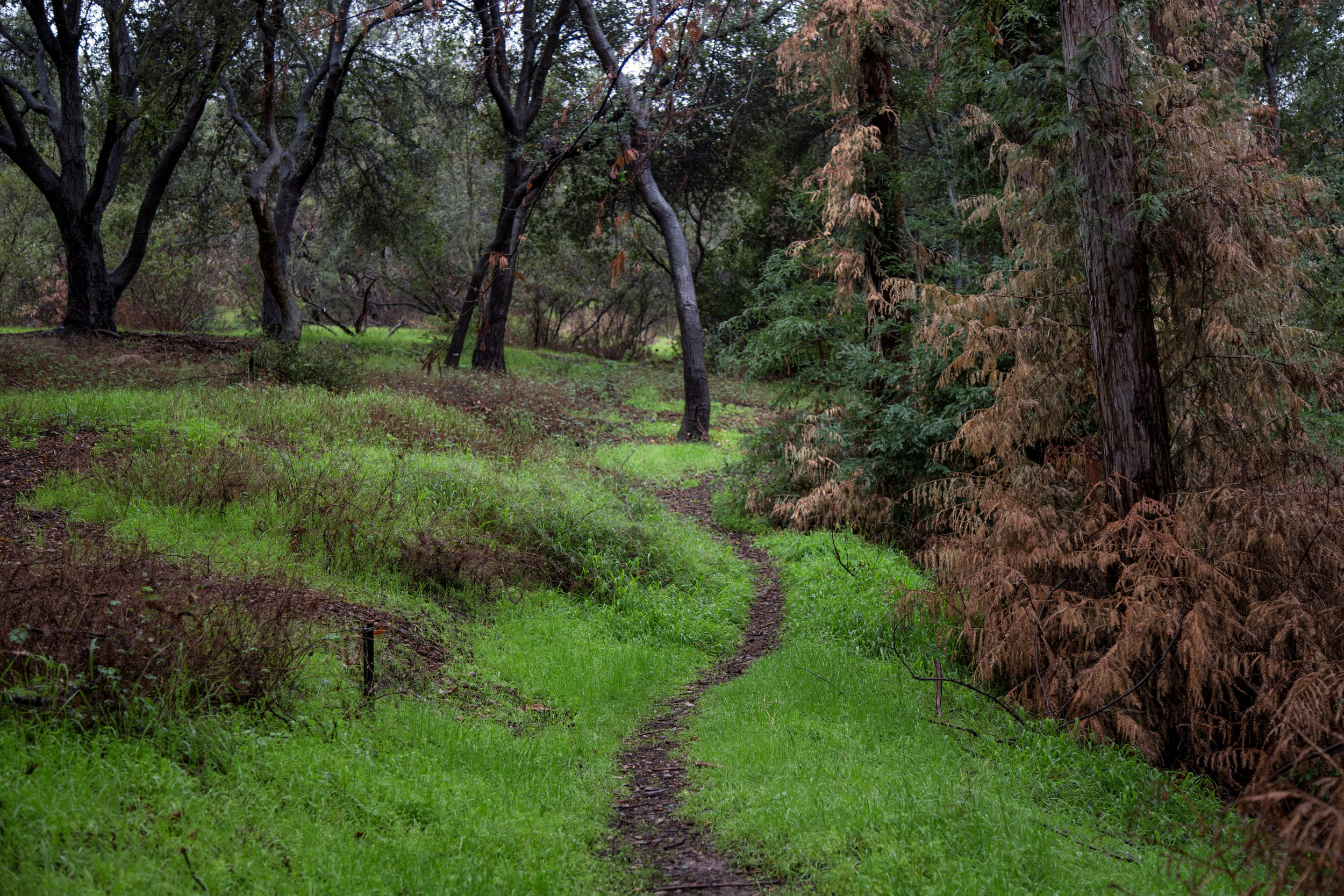 Walking along the Green Man path.