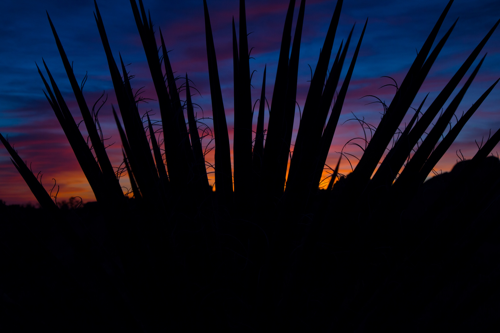 Sunrise at skull rock as seen through a yucca plant