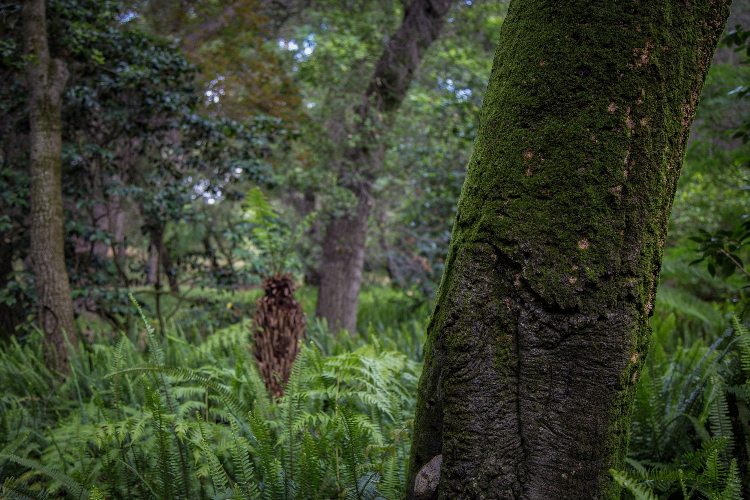 Moss, oak, fern