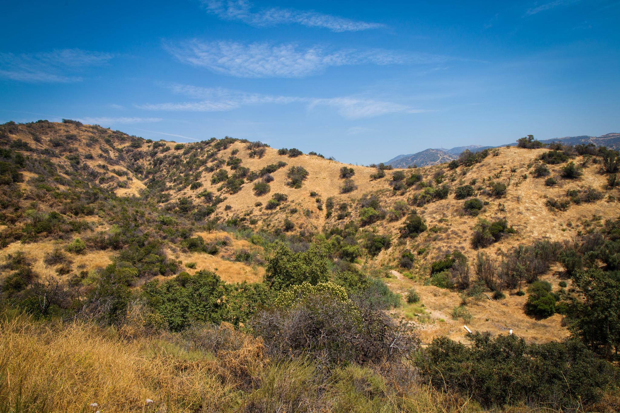 View atop Wild Flower Hill
