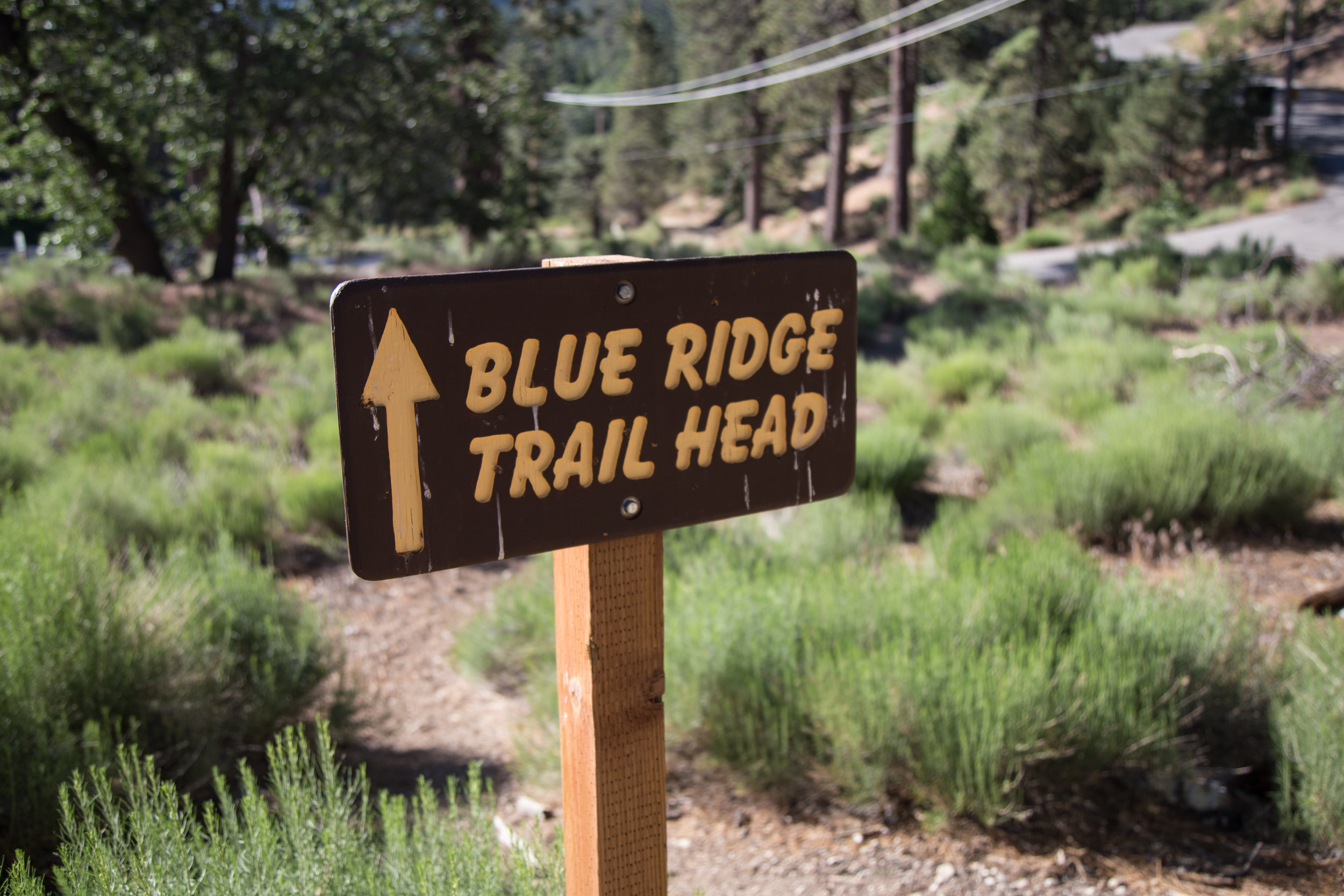 Start of the trail located across the street from the Big Pines Ranger Station