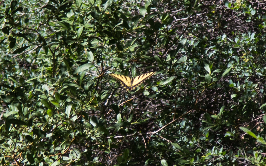Swallowtails were circling up and down the summit on our way back.
