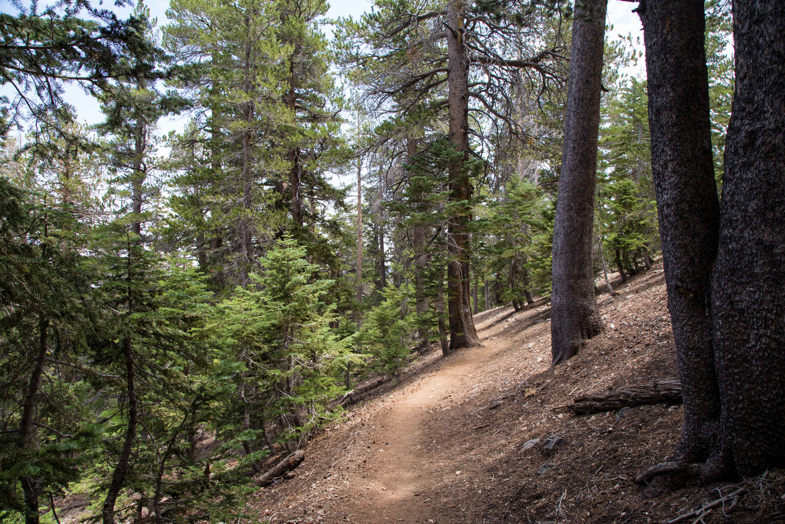 Back down to 8,111 ft. A very beautiful trail and much easier on the way down!