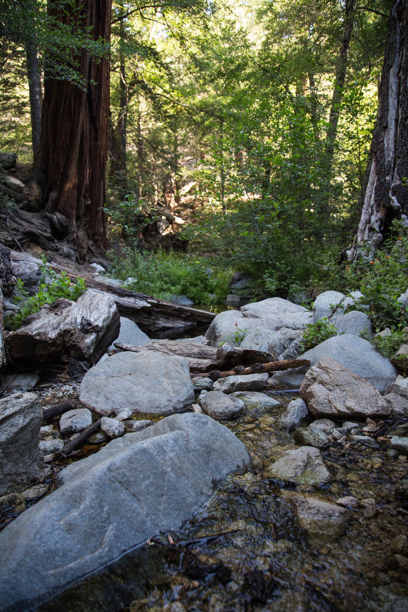 One of the two creek beds we crossed.