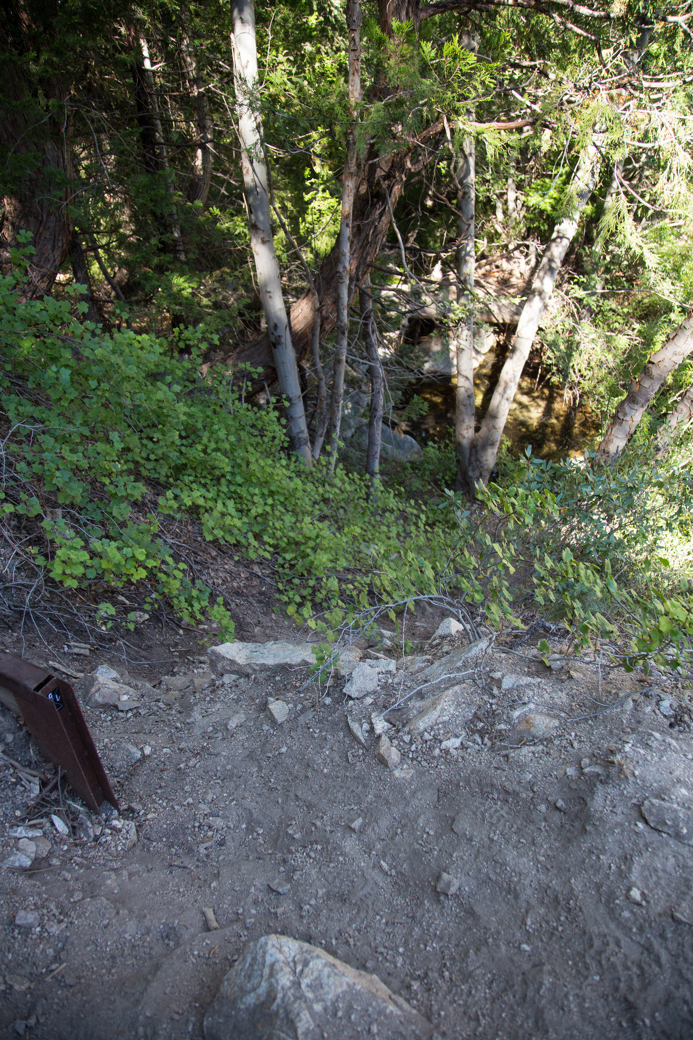 This is a use trail I found that you can scramble down to get to the falls... if they are falling! :)