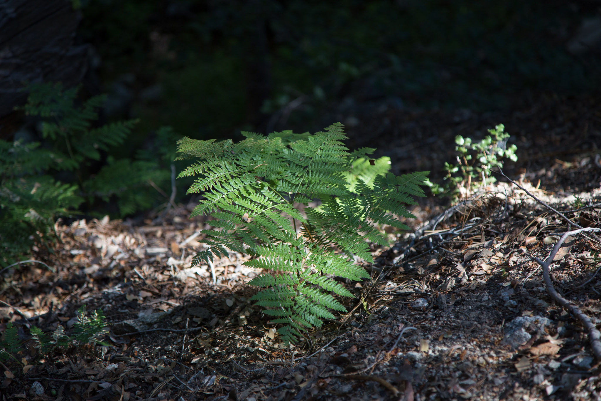 Lots of ferns along the way.
