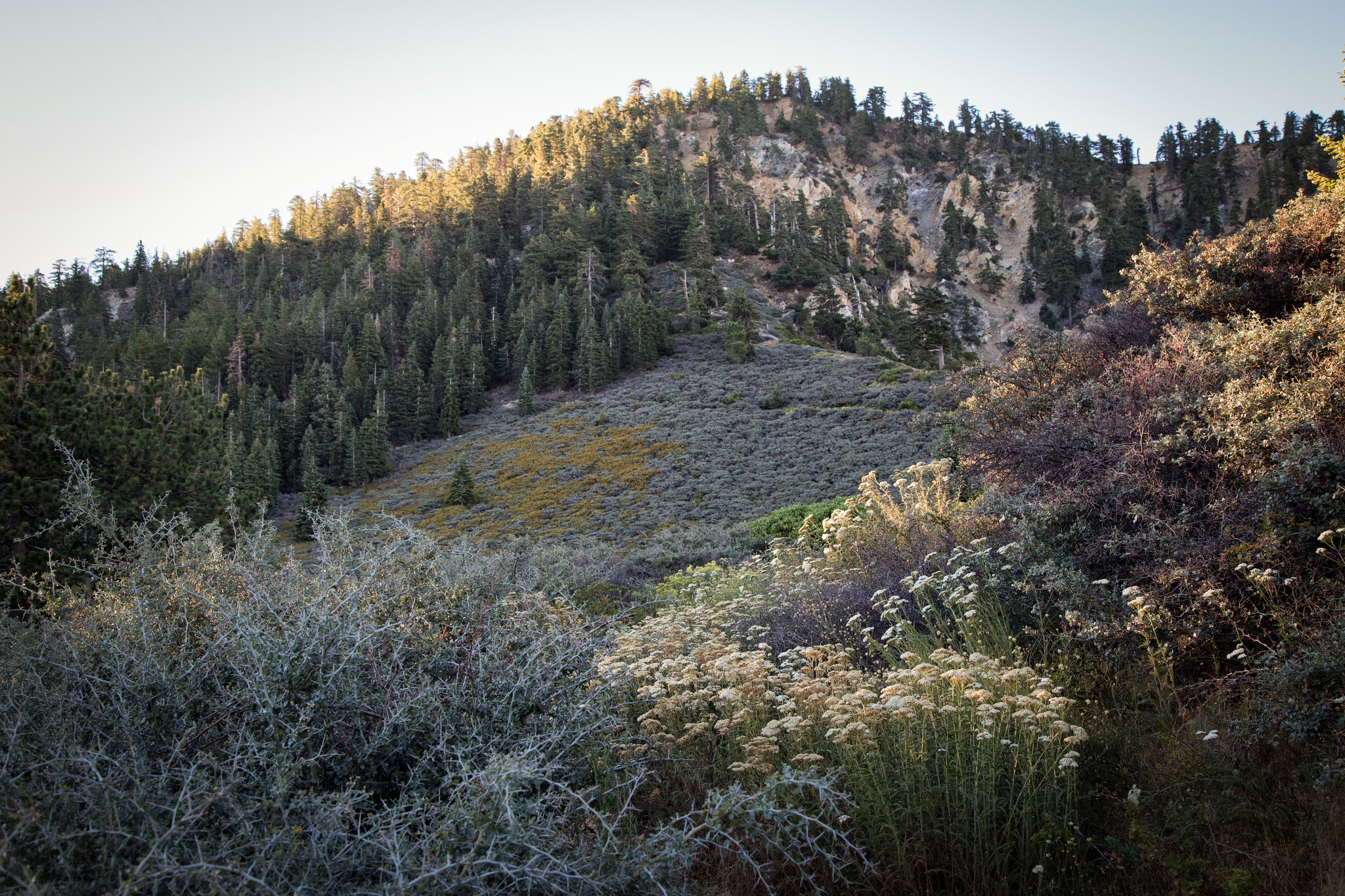 White yarrow and golden rabbitbrush bloom surrounded us on both sides of the path.