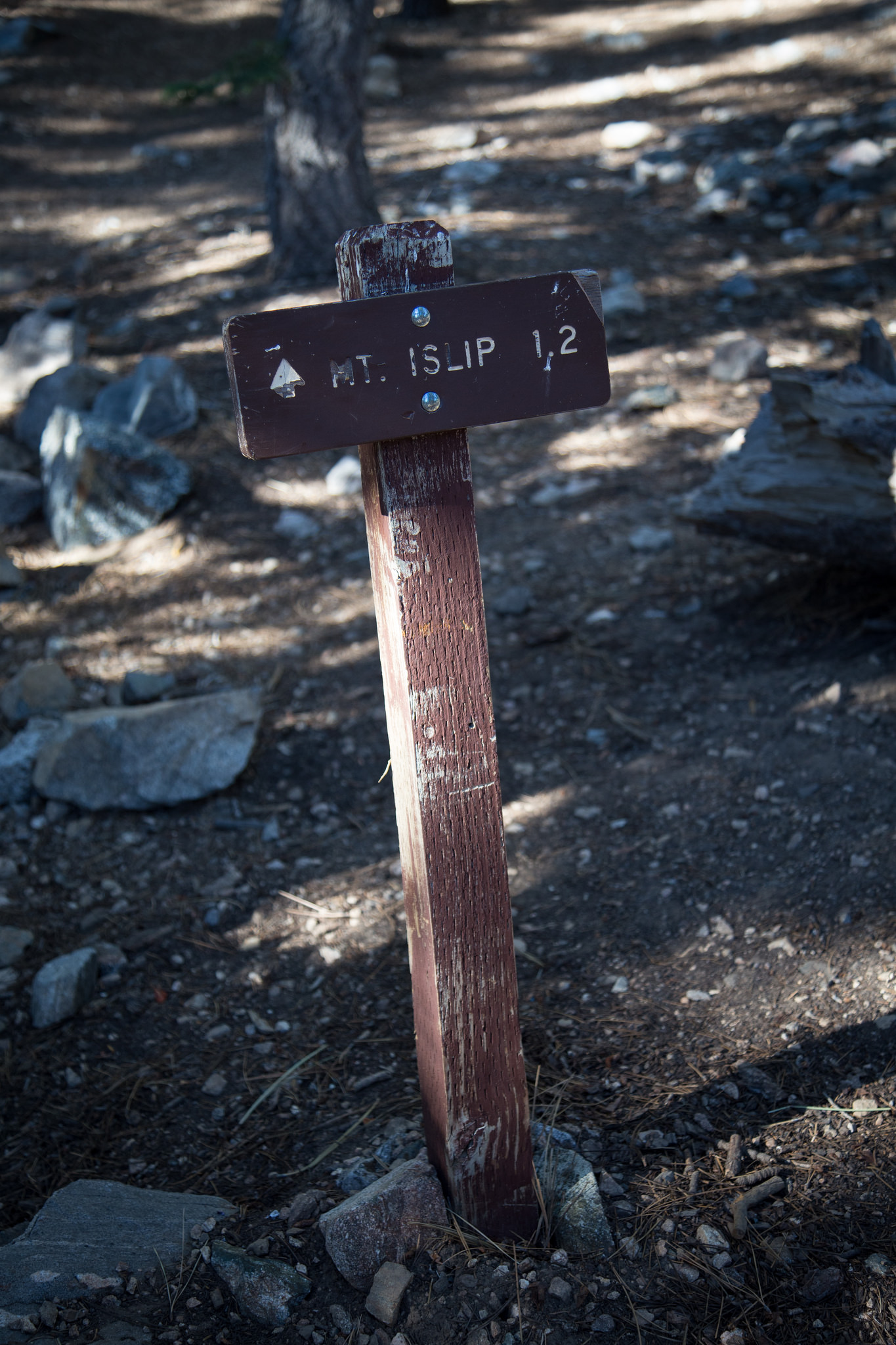 At this point, walk through the campground past the outhouses to find the Mt. Islip Trail to Islip Peak. The spur trail will take you to Little Jimmy Spring.