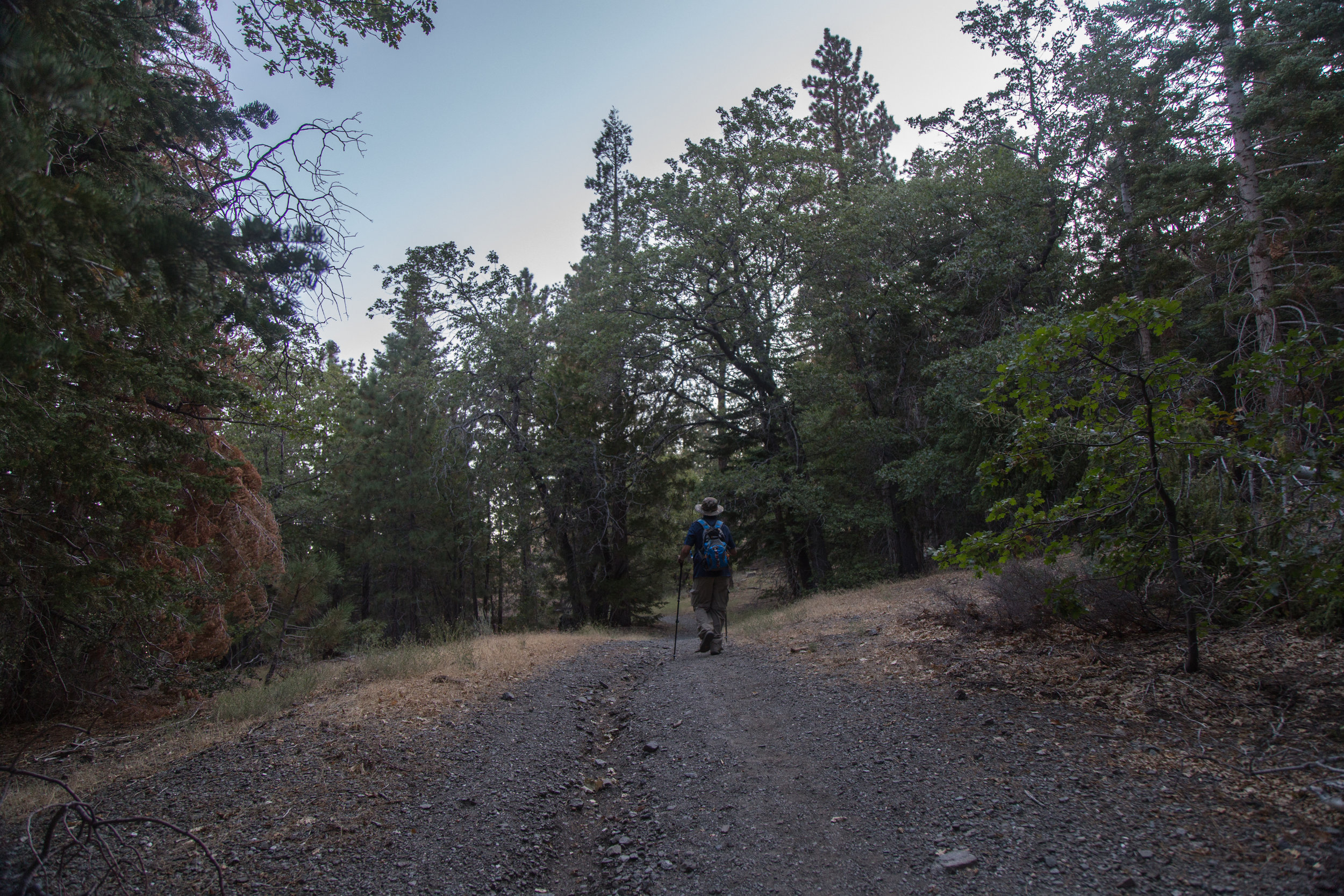 The trail starts off in a forest of pine and oak.