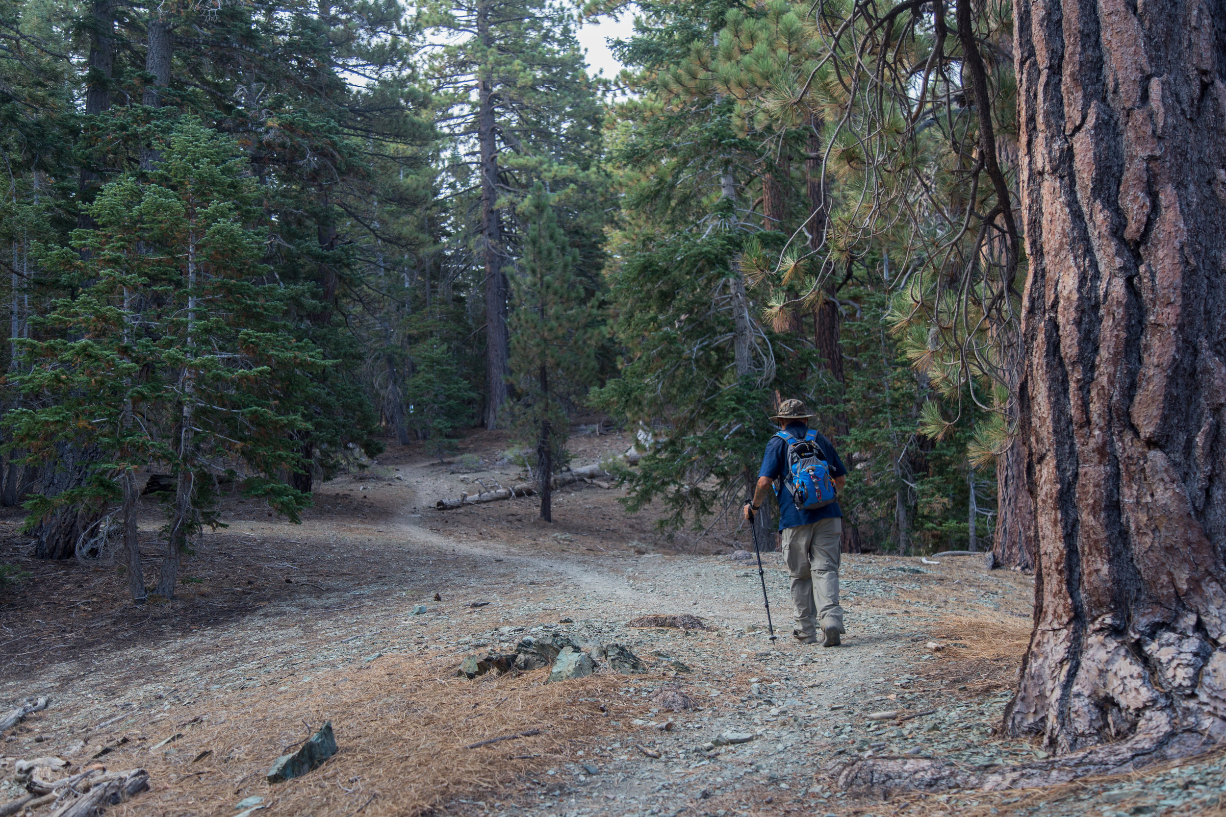 As you get closer to the junction with the PCT, the trail levels off a bit.