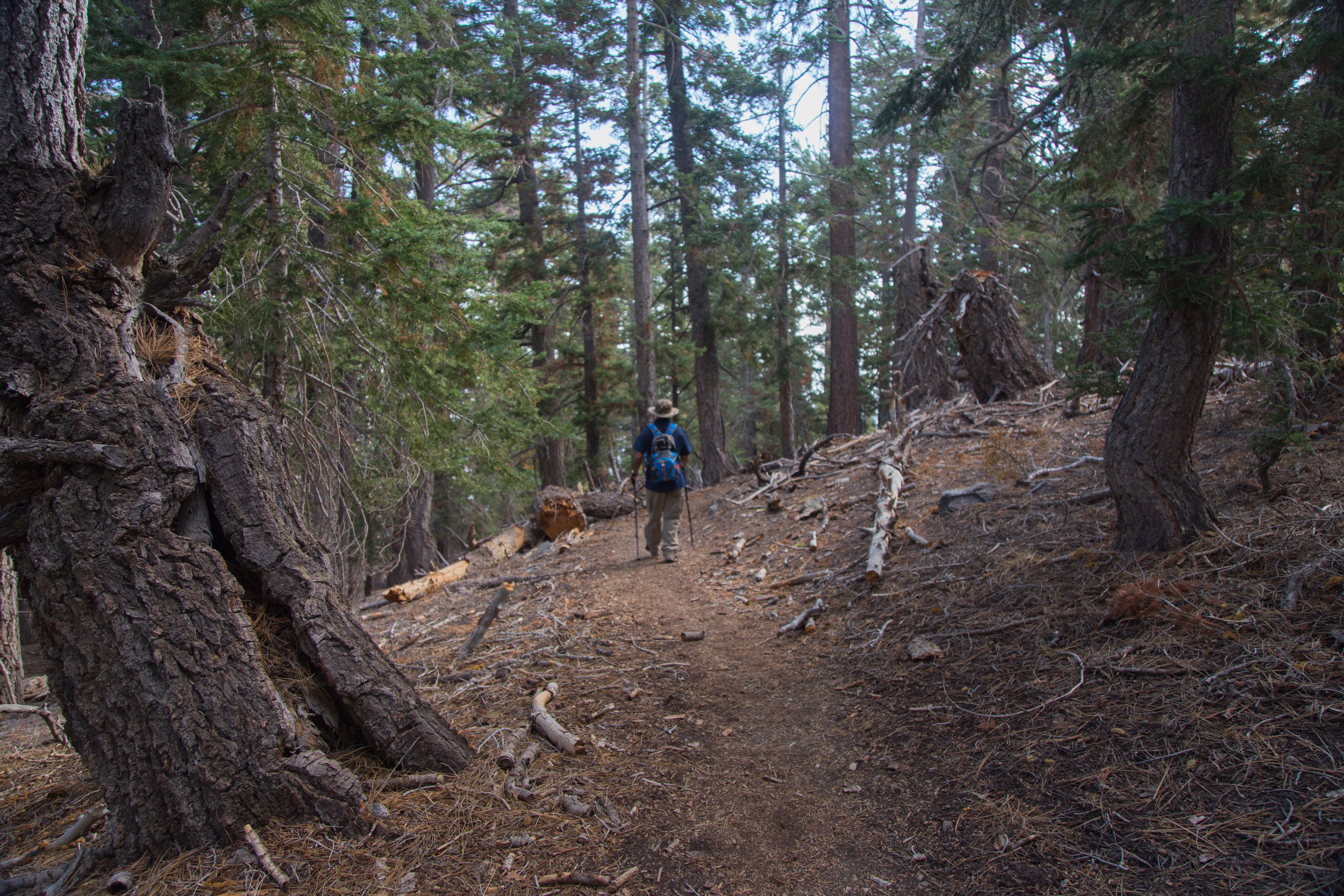 Walking along the PCT, a very pleasant stretch of trail.