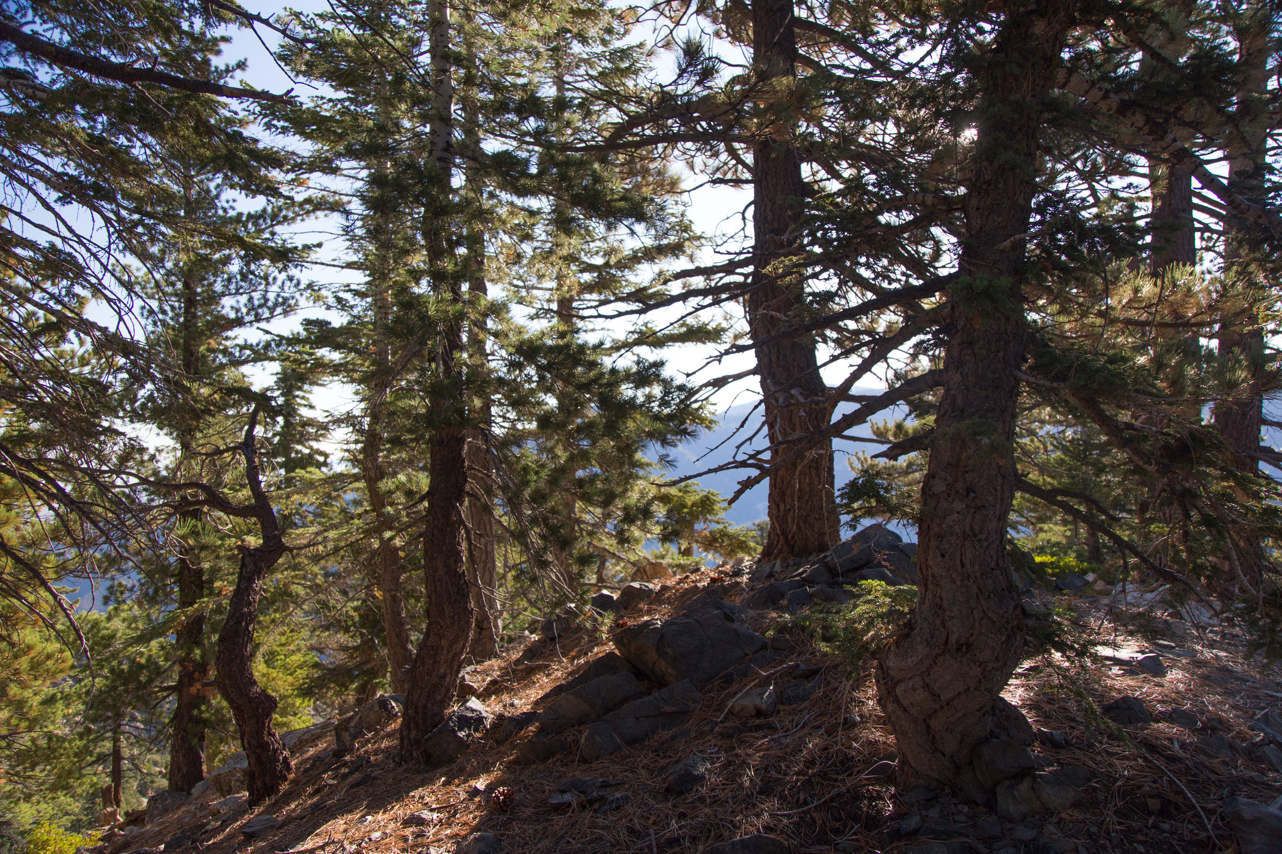 As you get closer to the split between the PCT and the trail to the summit, there is a spur trail that takes you to a little pine grove. I climbed up and took some photos. It's a nice place to stop and take a break or have a picnic.
