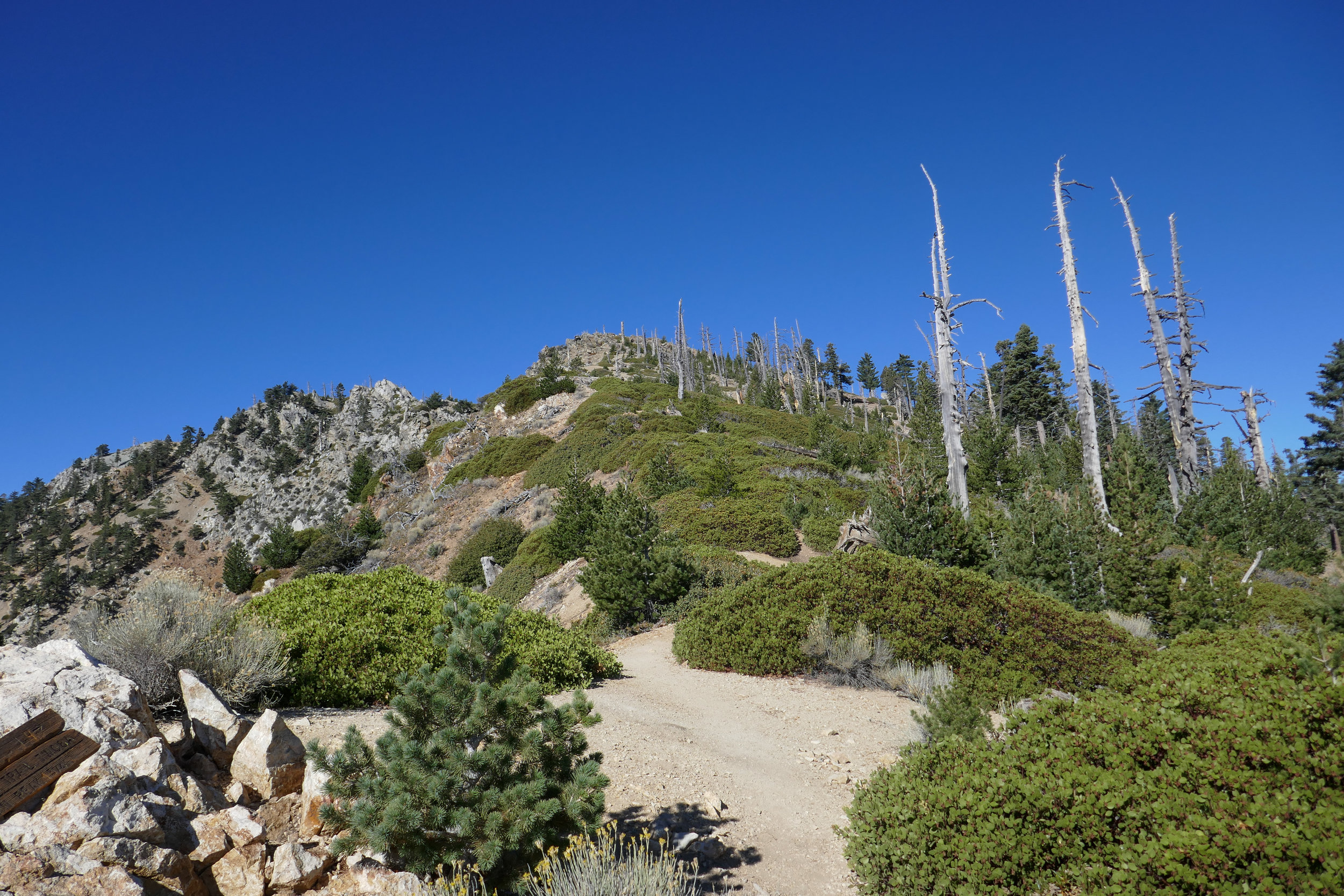 There were some false summits on this trail. Just when you think you see it, you realize you have a lot farther to go then you think!