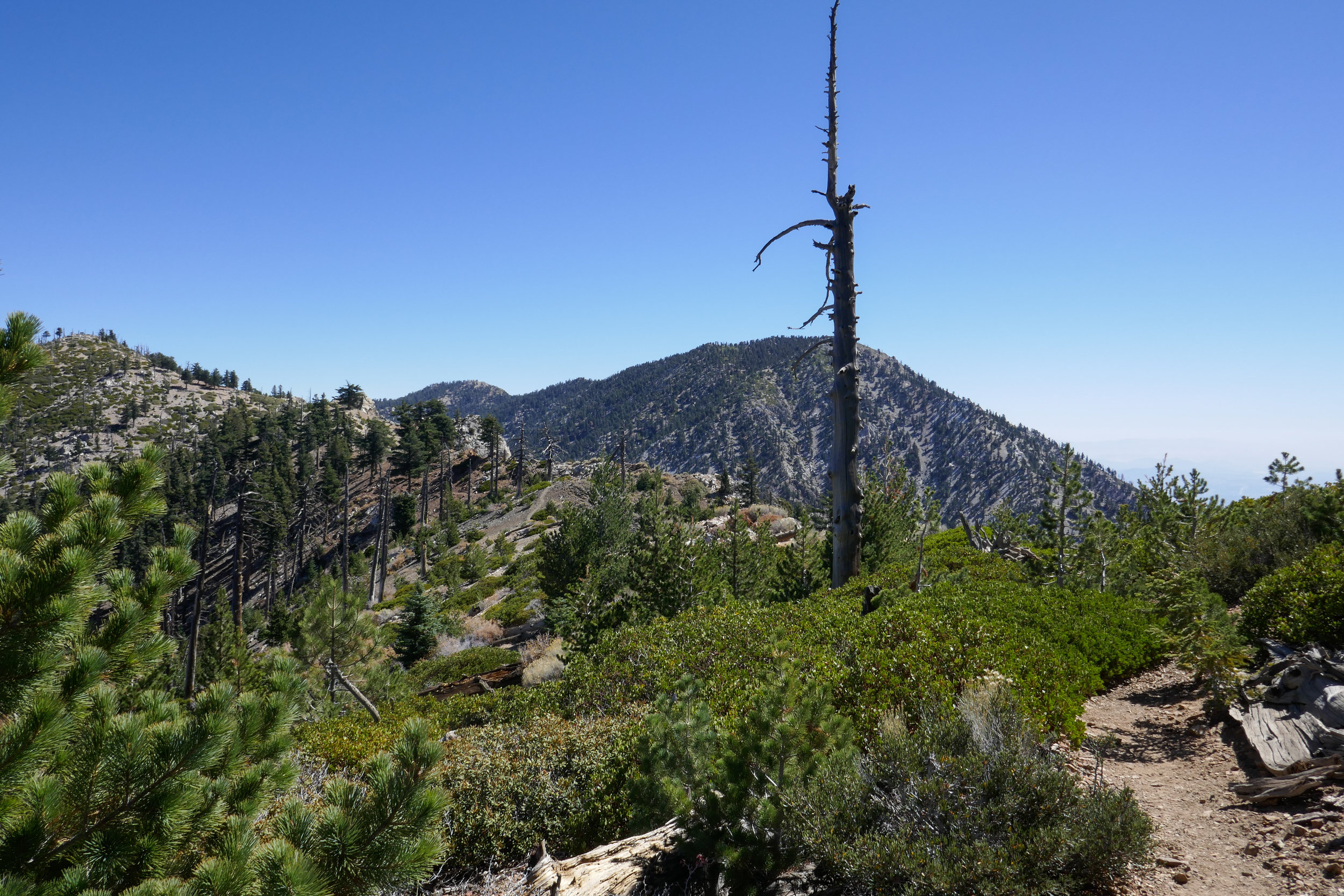 Looking across the ridge.