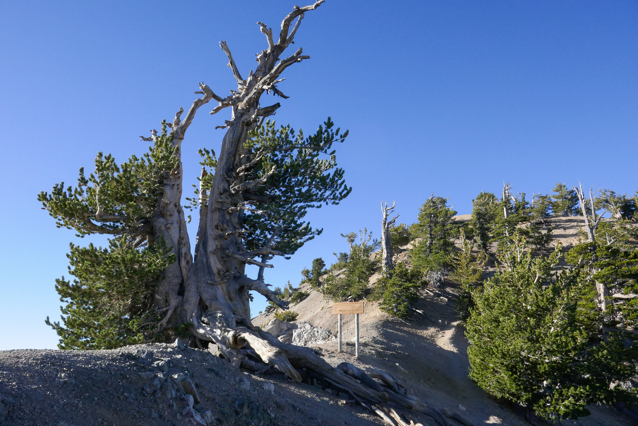 I didn't take a ton of photos along the way, but once we approached the ridge and the Wally Waldron tree and the limber pines came into view, I started snapping away.