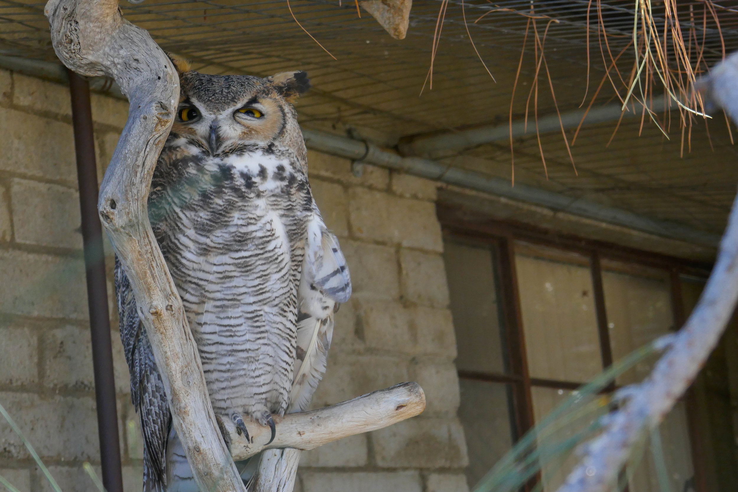 At the nature center we met these two beautiful owls, Squint and...