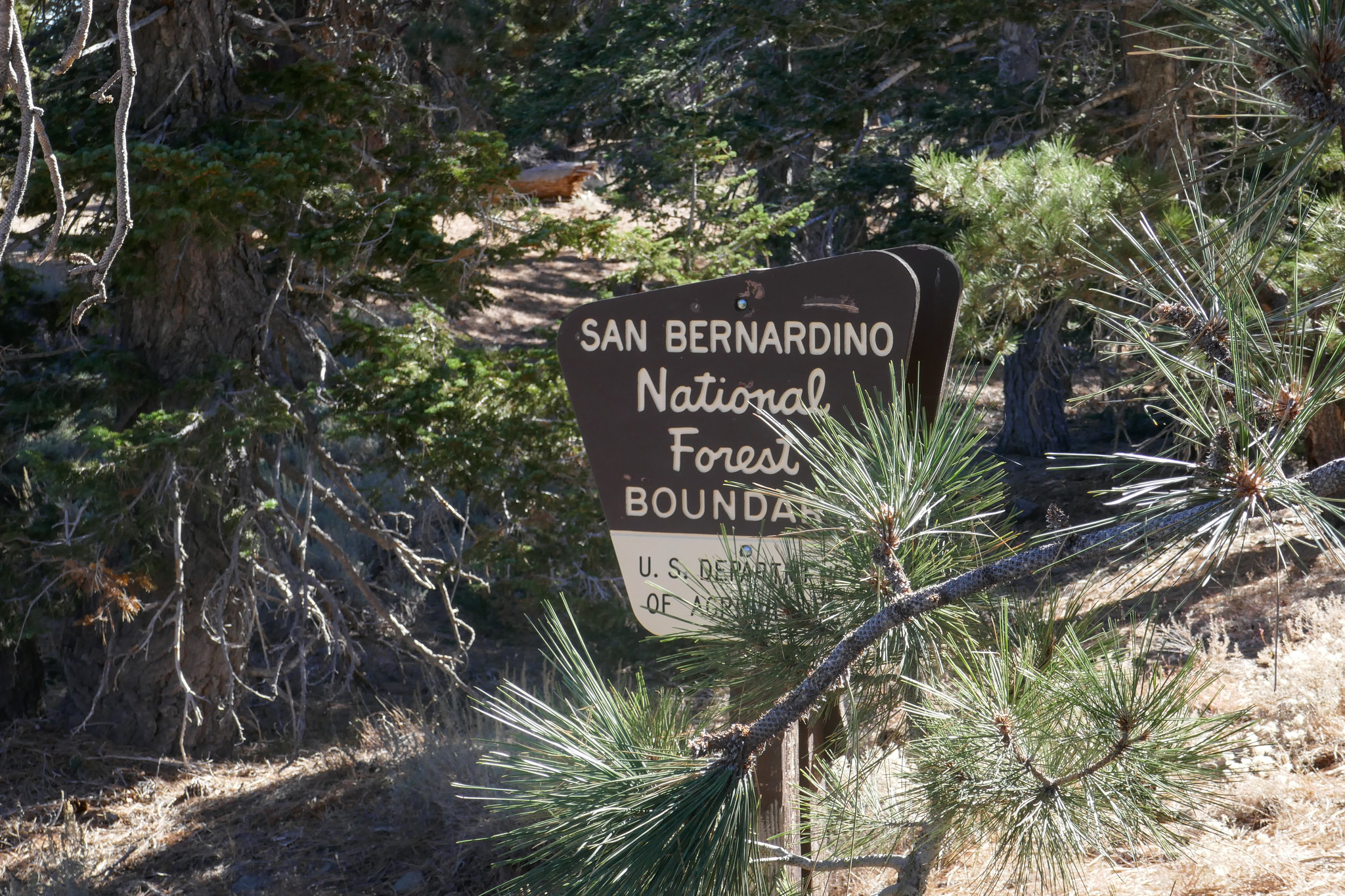 We crossed over into the San Bernardino National Forest.
