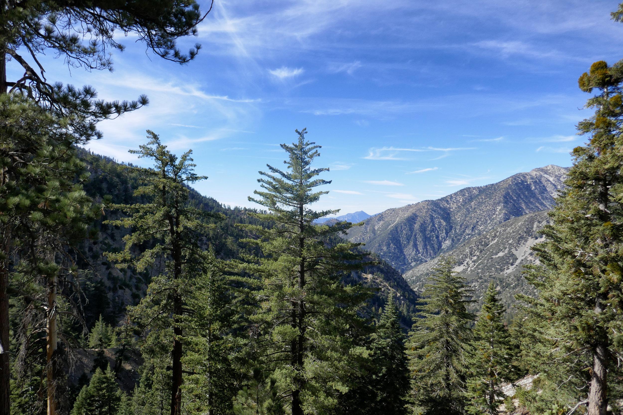 Cucamonga Wilderness.