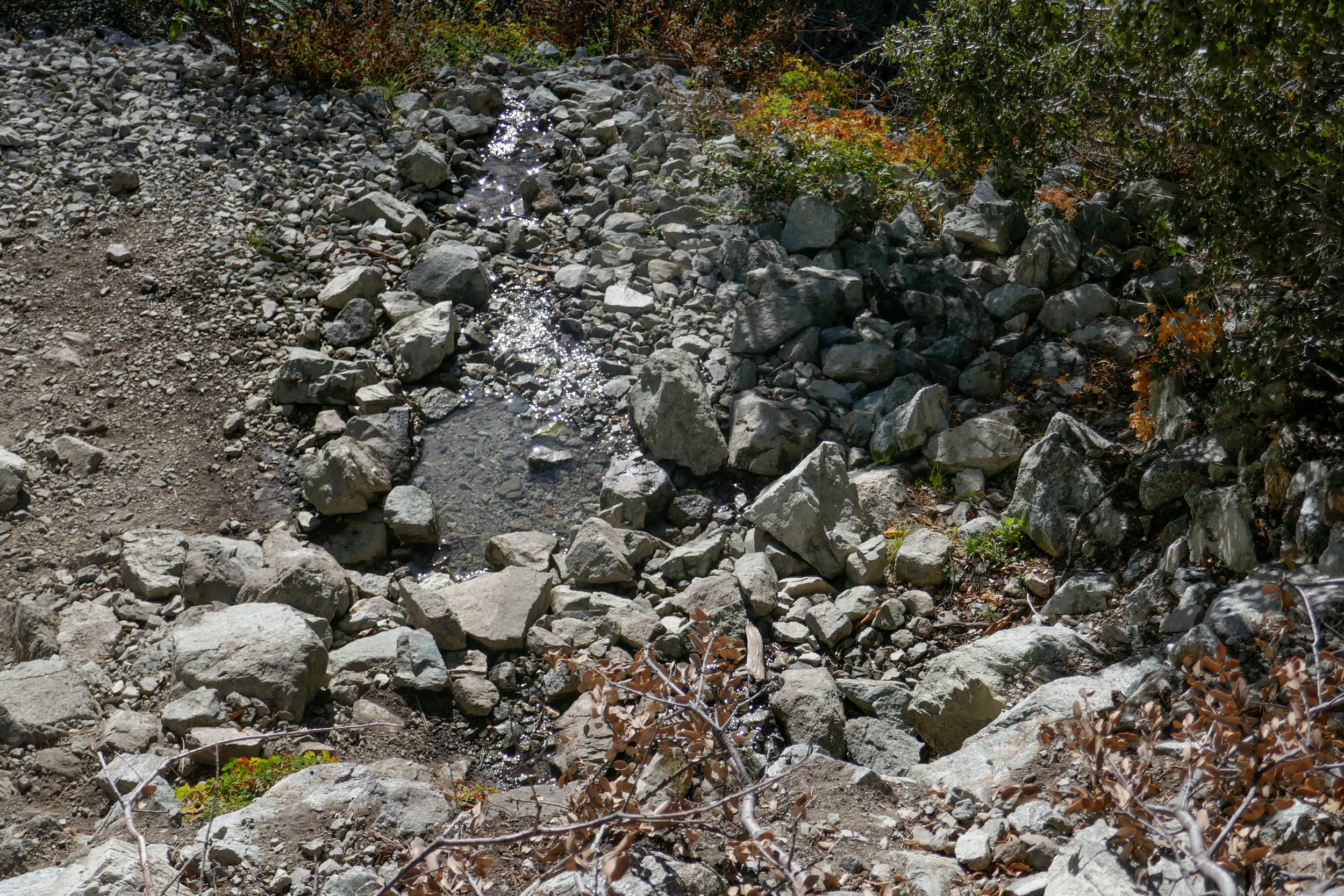 Columbine Spring. When you are hiking up to Icehouse Saddle, this will be your last water source. Note: Always treat your water before drinking it!