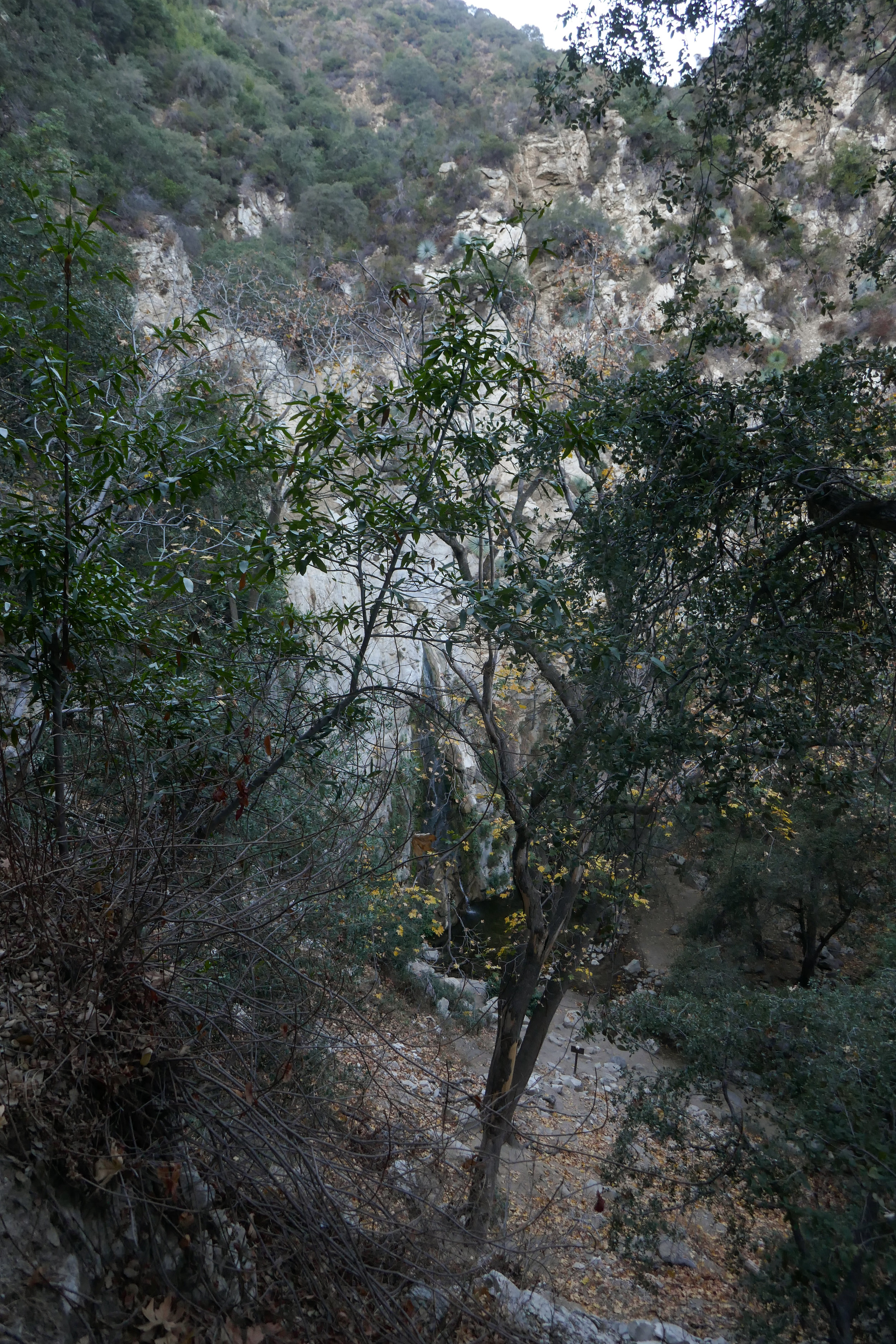 Looking through the trees at Sturtevant Falls.