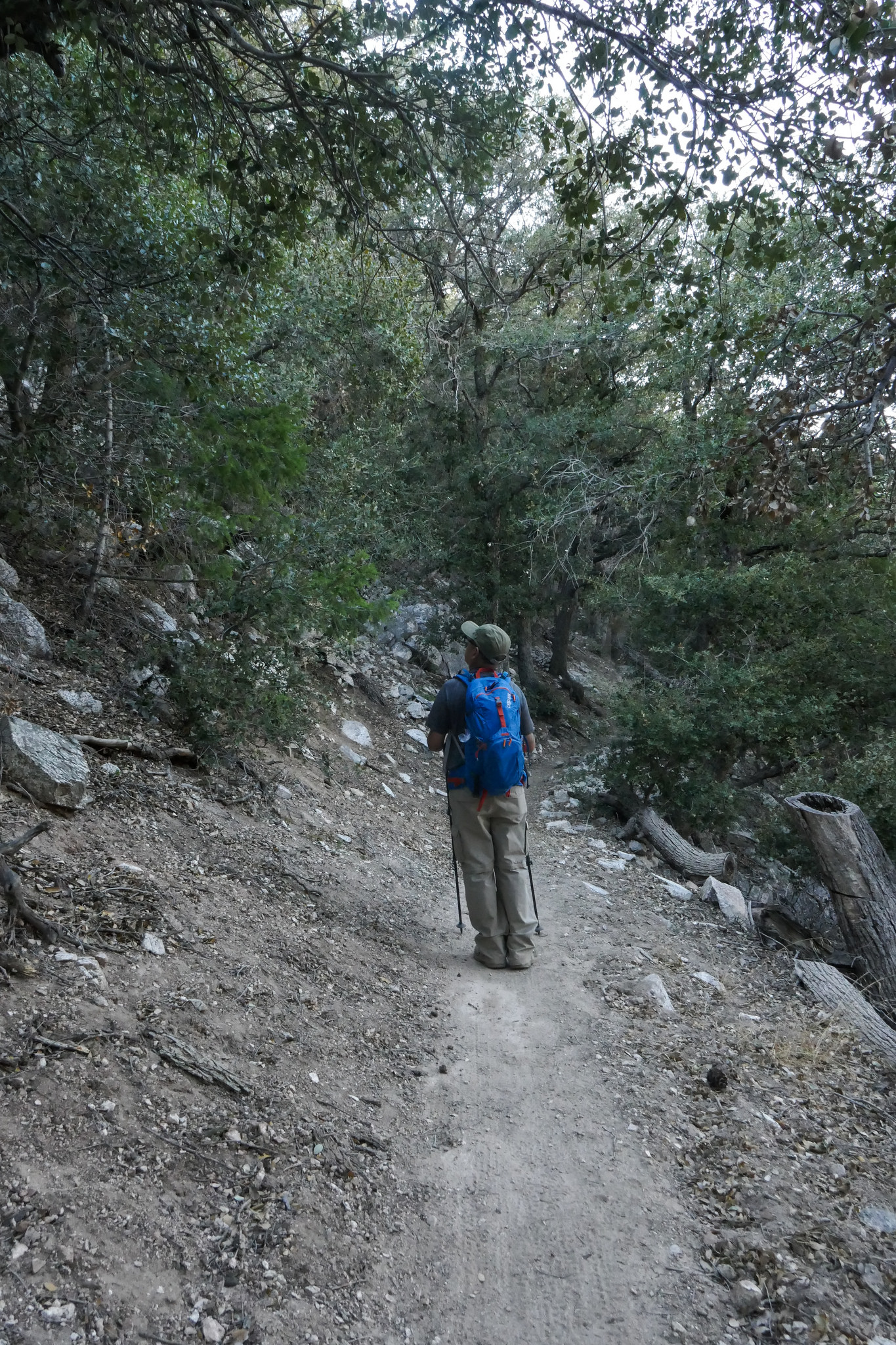 Heading back down now on the Sam Merrill Trail. This trail had a lovely stretch of oak forest.
