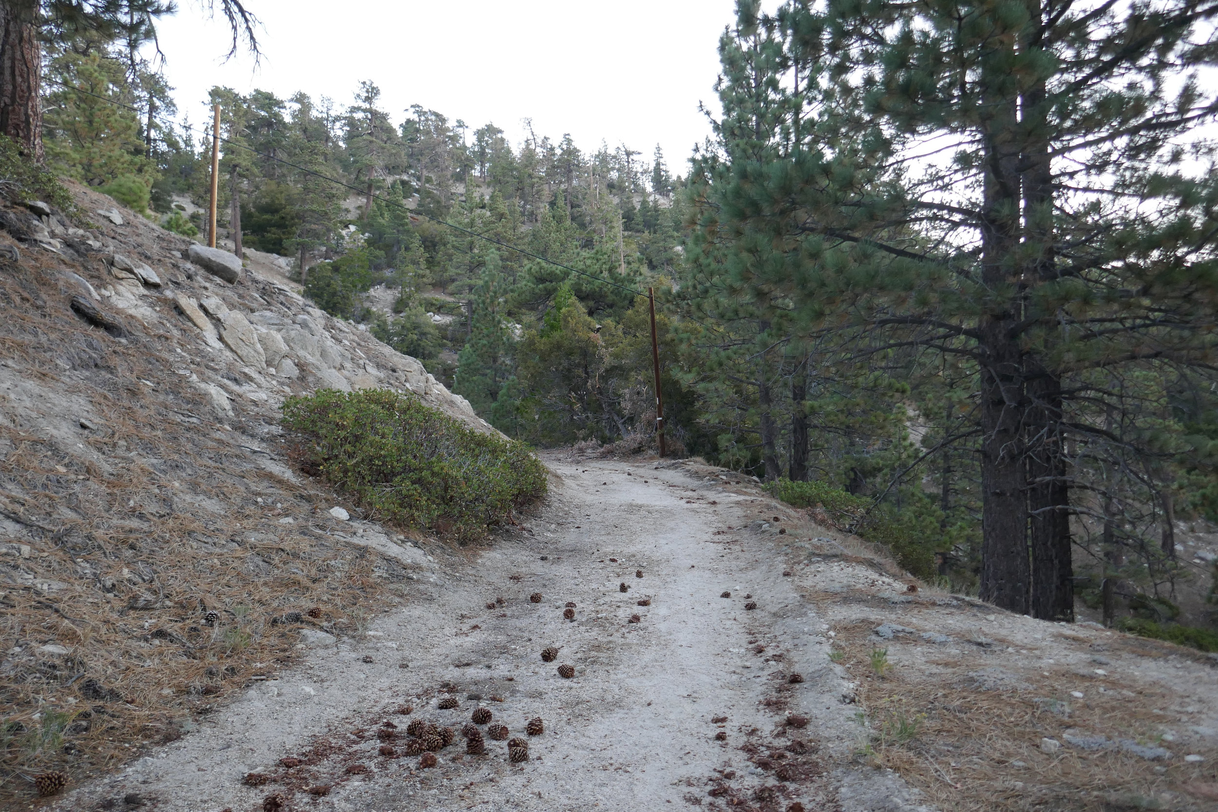 We arrive at the turnout/parking area around 6 am and start up an old fire road.