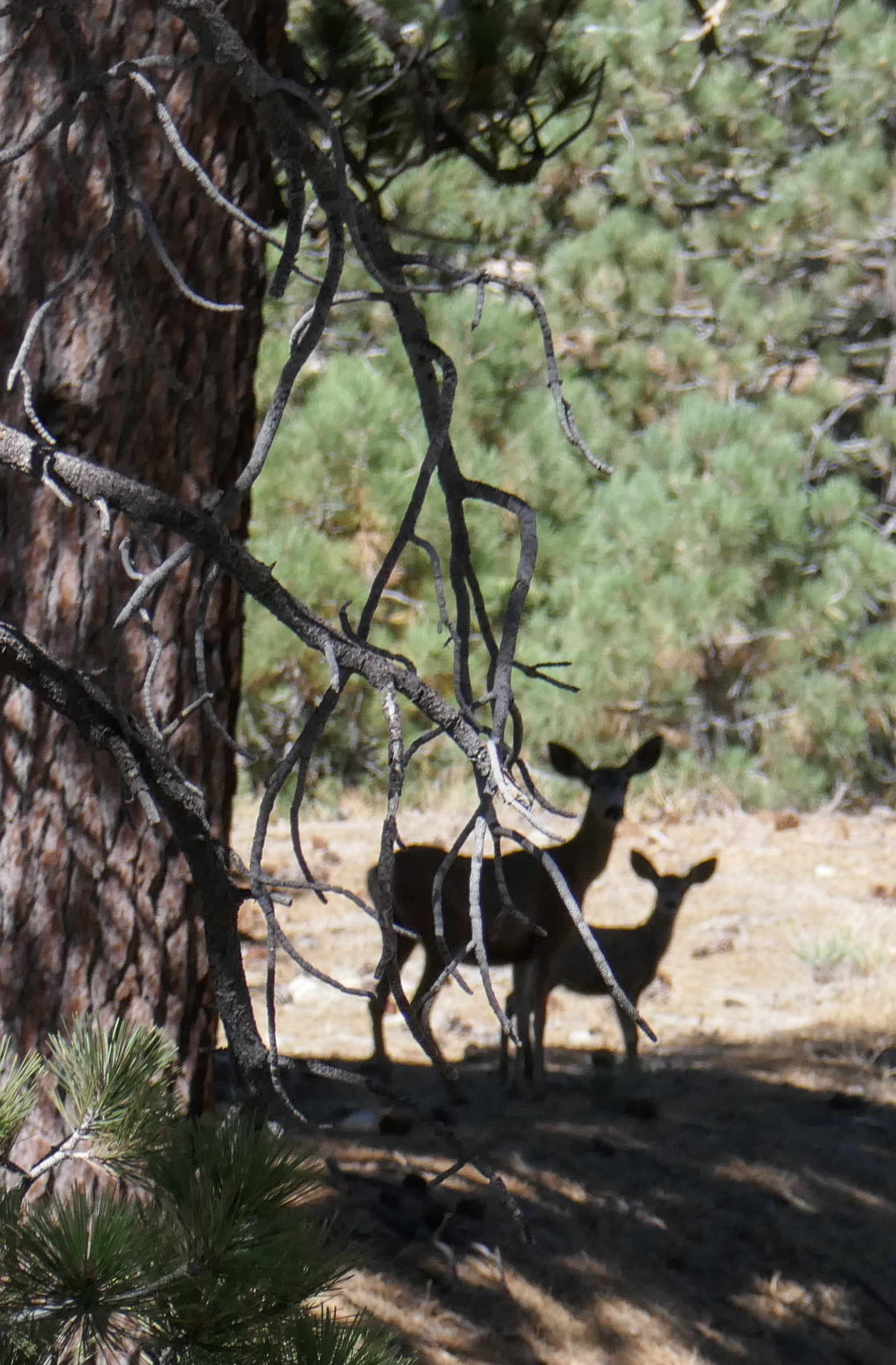 We saw a lot of deer today; five of them as we were hiking, and here we come across a doe and her fawn looking cautiously at us humans.