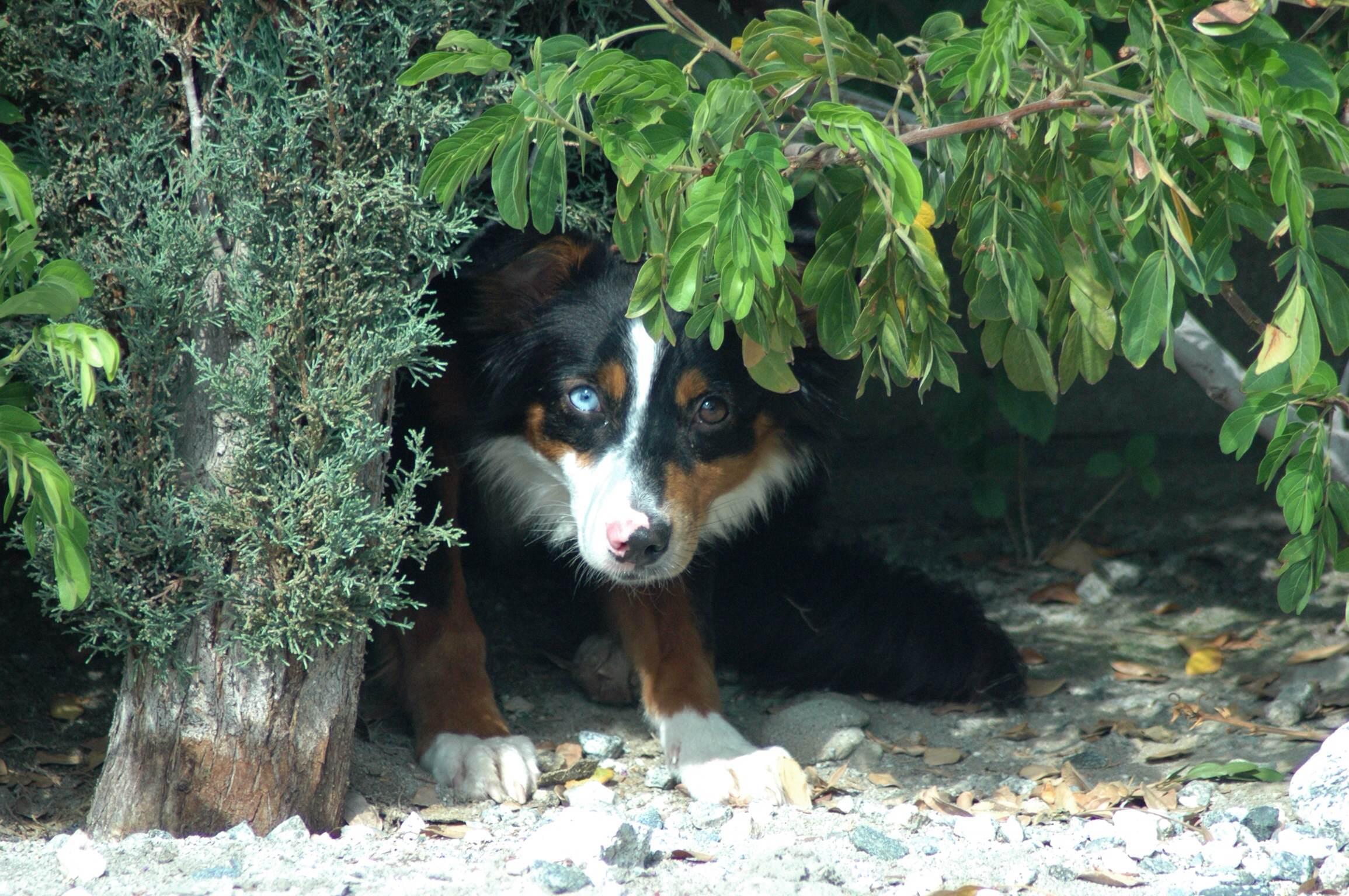 Olive (in hiding)