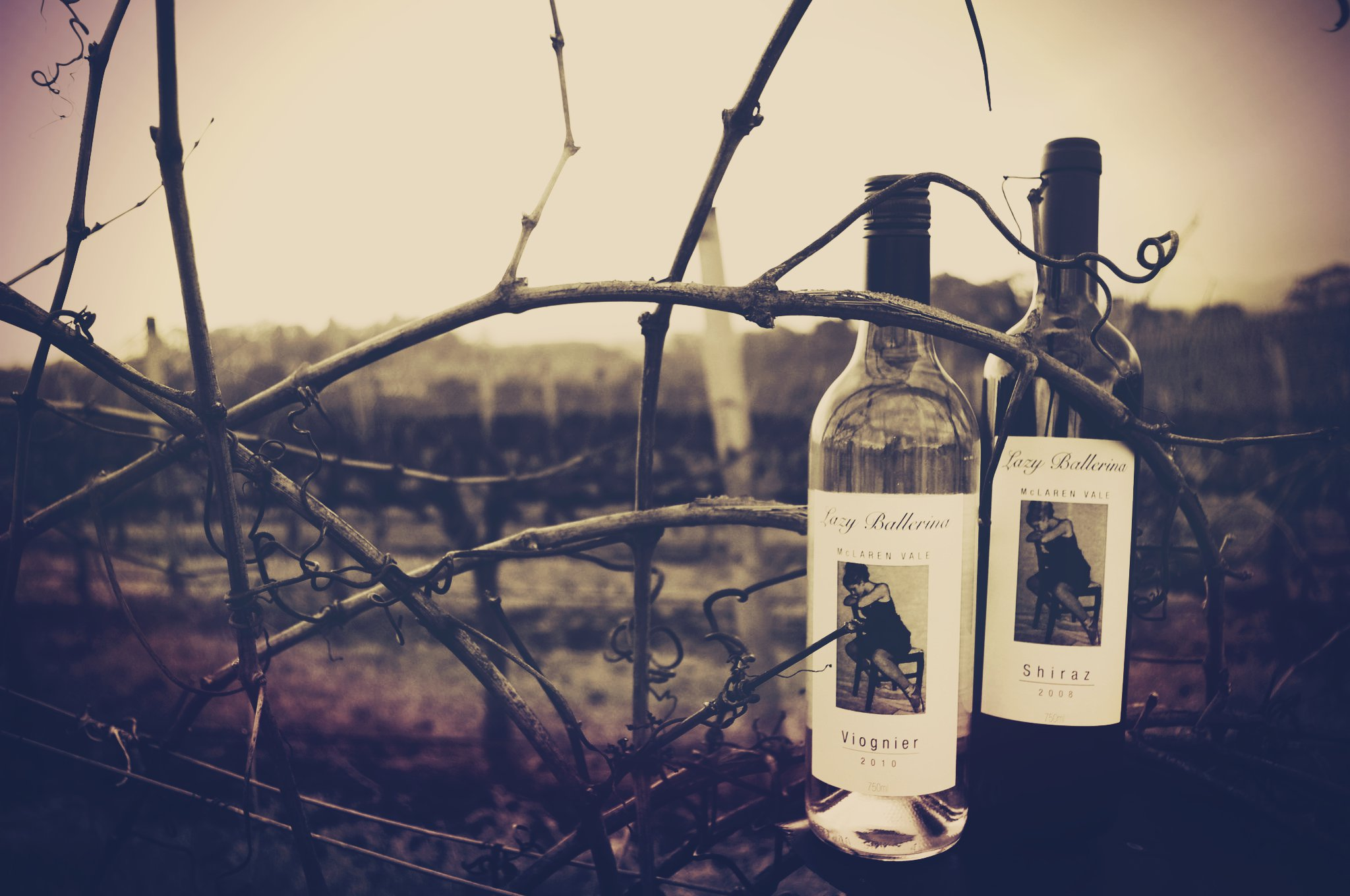 Winter in the vineyard... its not all wine bottle shots and pruning... we do sciency things too!