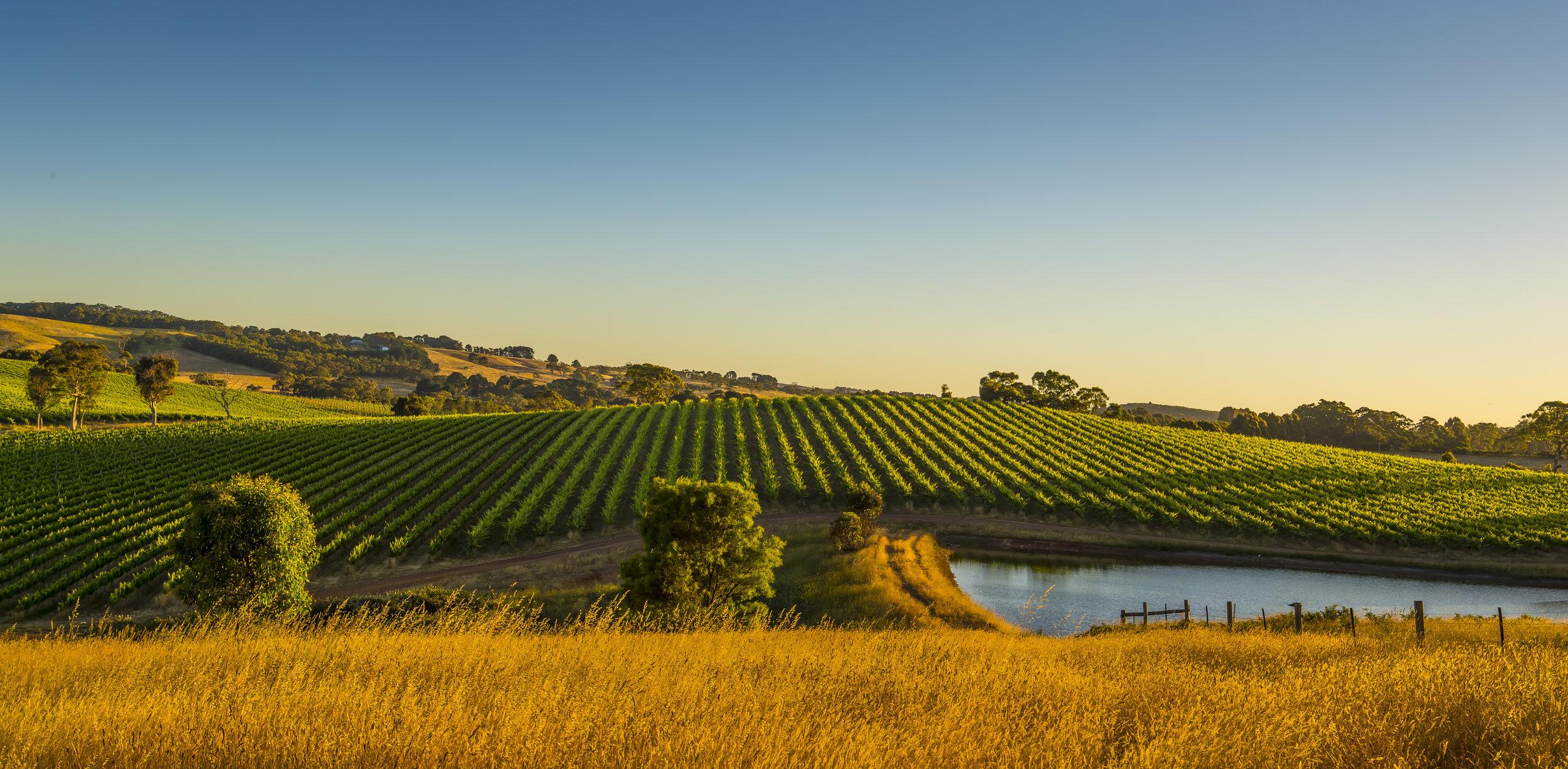 Golden Child Wines - McLaren Range vineyard.