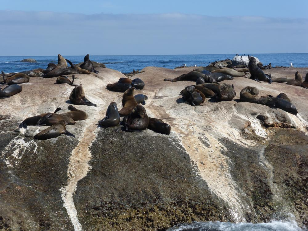 """Our first stop, Duiker Island to see the seals frolic.                0    0    1    8    49    Kikio Creative Communications    1    1    56    14.0                          Normal    0                false    false    false       EN-US    JA    X-NONE                                                                                                                                                                                                                                                                                                                                                                                                                                                                                                                             /* Style Definitions */ table.MsoNormalTable {mso-style-name:""""Table Normal""""; mso-tstyle-rowband-size:0; mso-tstyle-colband-size:0; mso-style-noshow:yes; mso-style-priority:99; mso-style-parent:""""""""; mso-padding-alt:0in 5.4pt 0in 5.4pt; mso-para-margin:0in; mso-para-margin-bottom:.0001pt; mso-pagination:widow-orphan; font-size:12.0pt; font-family:Cambria; mso-ascii-font-family:Cambria; mso-ascii-theme-font:minor-latin; mso-hansi-font-family:Cambria; mso-hansi-theme-font:minor-latin;}"""