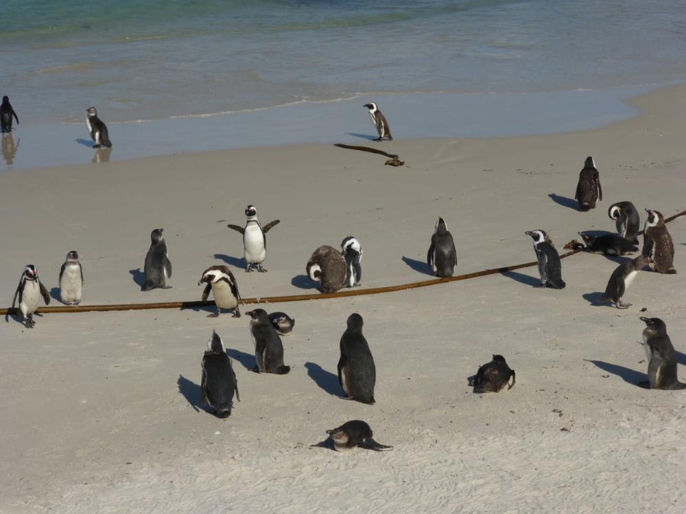 Penguin 1-Blog.jpg