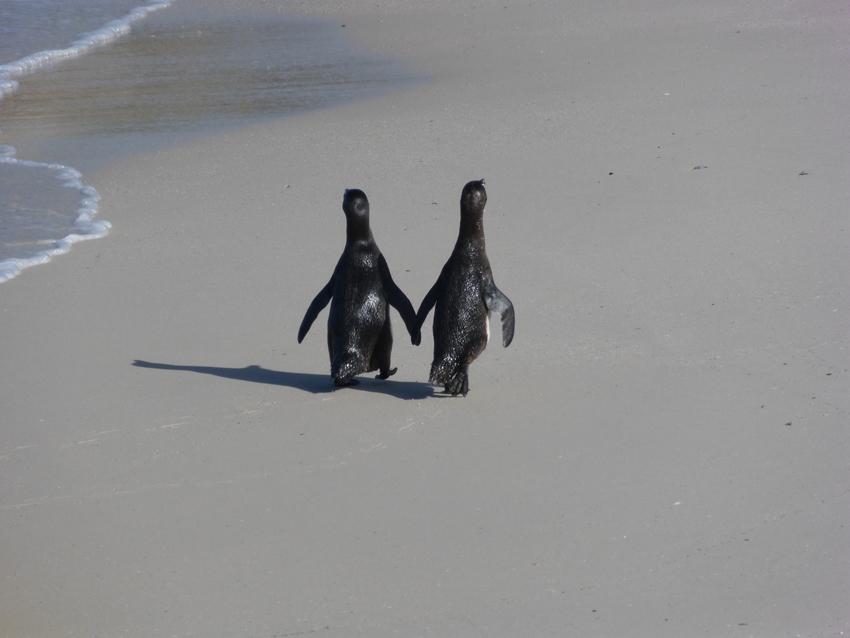 Penguin love is adorable.