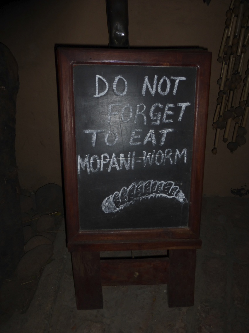 Even the mopani worm gets eaten (but, not by any of us)