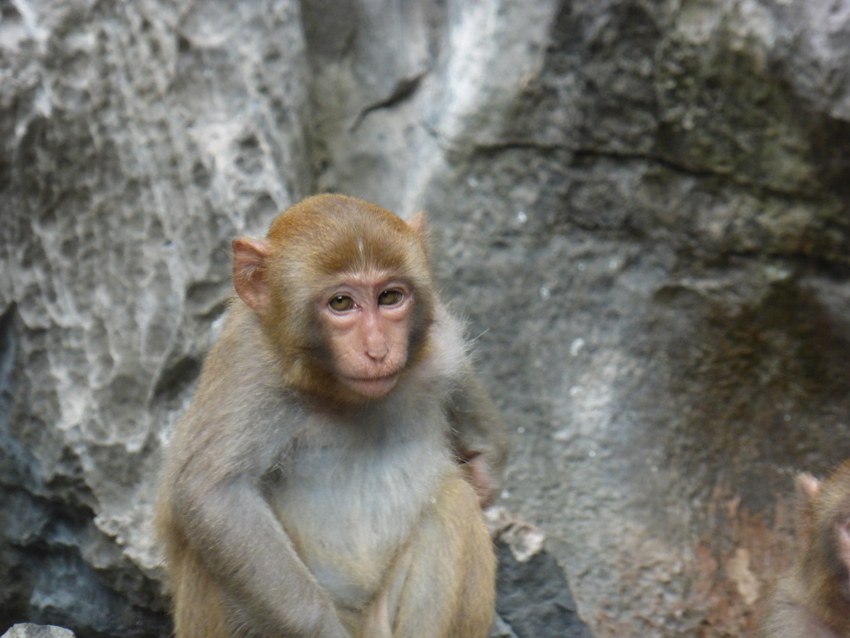 We got to visit the largest cave in Halong Bay. And, see some very serious monkeys.