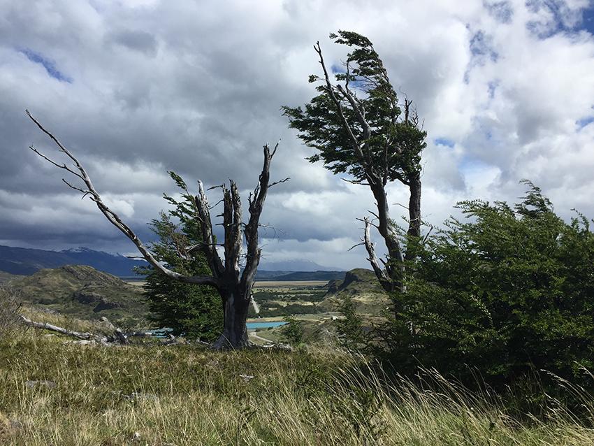 Trees blowing on hike.jpg