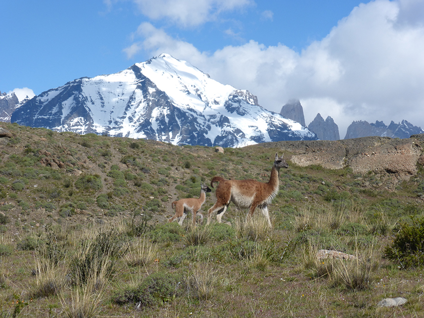 It's Spring in Patagonia…lots of cute babies running around.