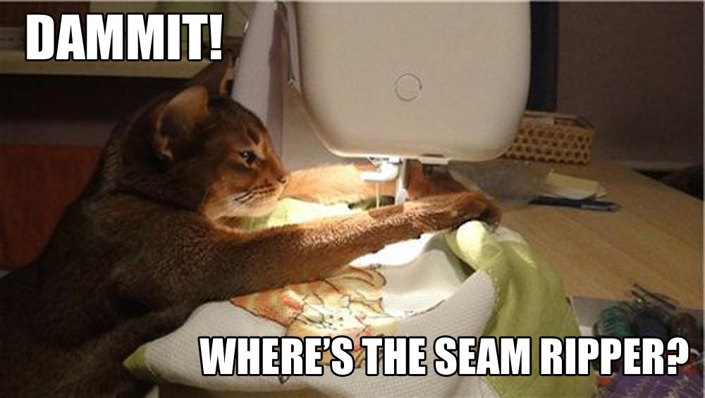 SEw Confident cat