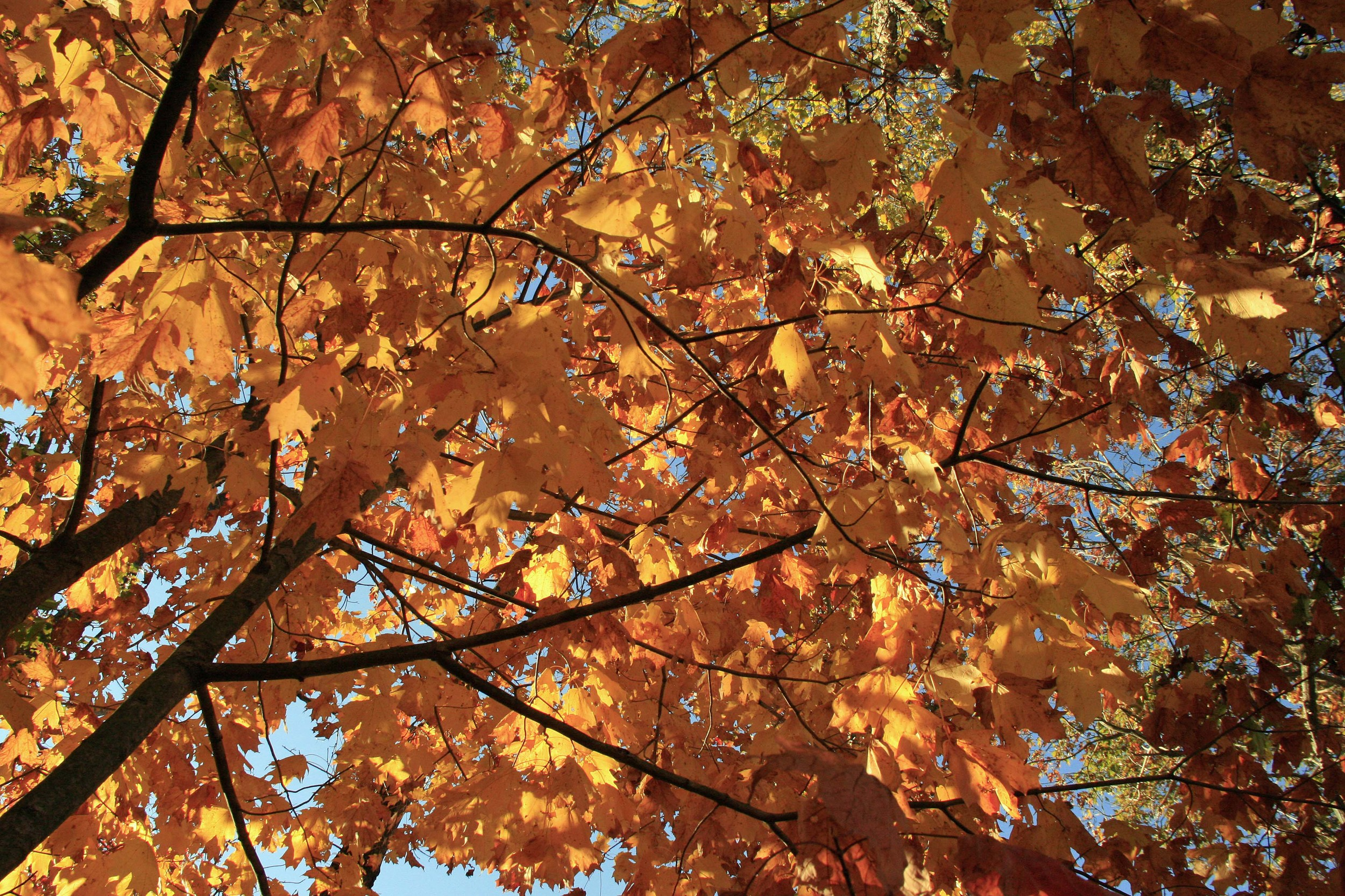 No matter what kind of creative work we do, it's impossible to exist as a single leaf on a big, empty tree.