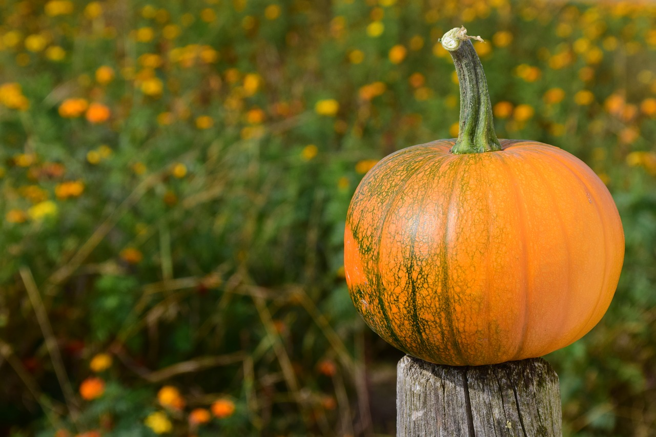 The day begins with possibilities. You may join others this week, or maybe not. But somehow that pumpkin got up onto that fence post (it didn't get there by itself!)