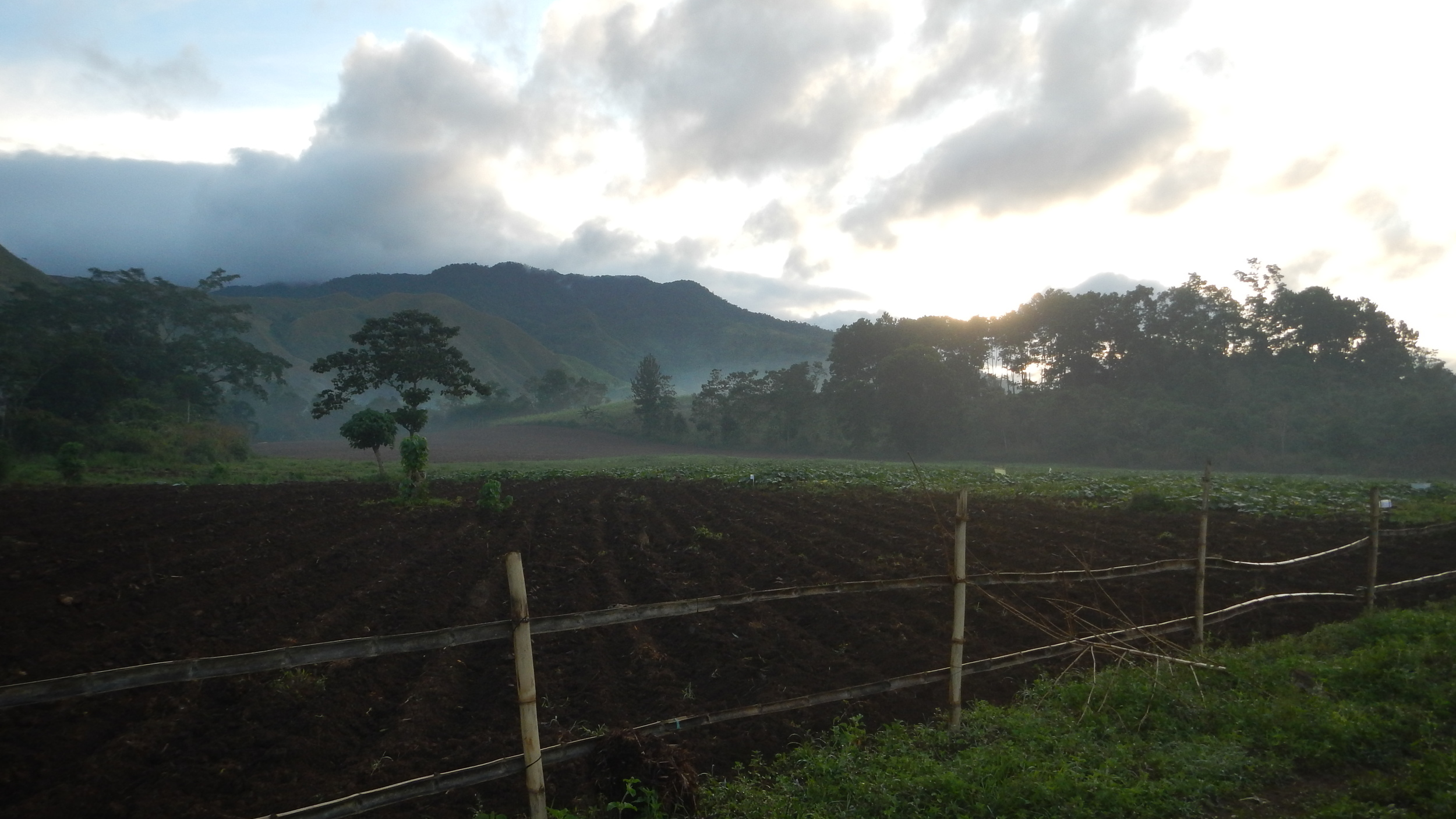 11-3-15. Early morning at the farm..jpg