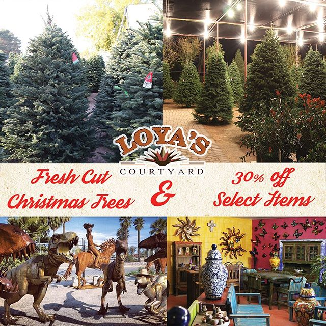 Fresh cut Christmas trees arrive Saturday! Pick up your tree and enjoy 30% OFF SELECT ITEMS this Saturday!  Each beautiful grade A tree is openly displayed & tagged with a unique name. We keep every single tree on water and only bail it once you pick it. We'll even load the trees for you and also offer local delivery options. We're located at the corner of Miracle Mile and Oracle Road.  Shop for you tree & enjoy Christmas music, free hot chocolate & cookies. We're open 7 days a week until 8pm each night.