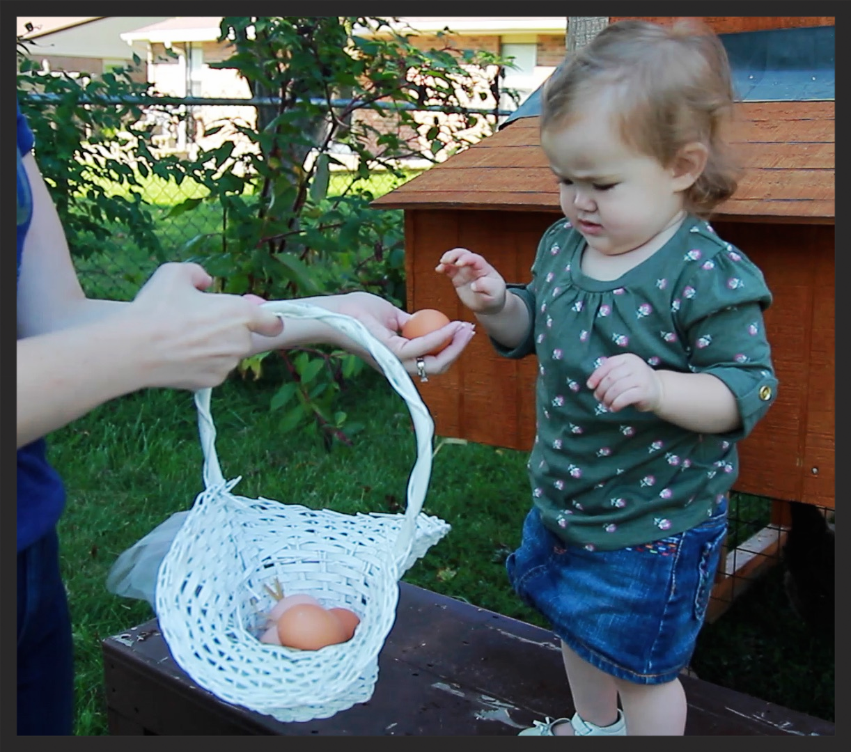 The McBride's youngest, daughter Eleanor Grace, looks over an egg pulled from the family's chicken coop. The McBride's have six hens in their suburban backyard.