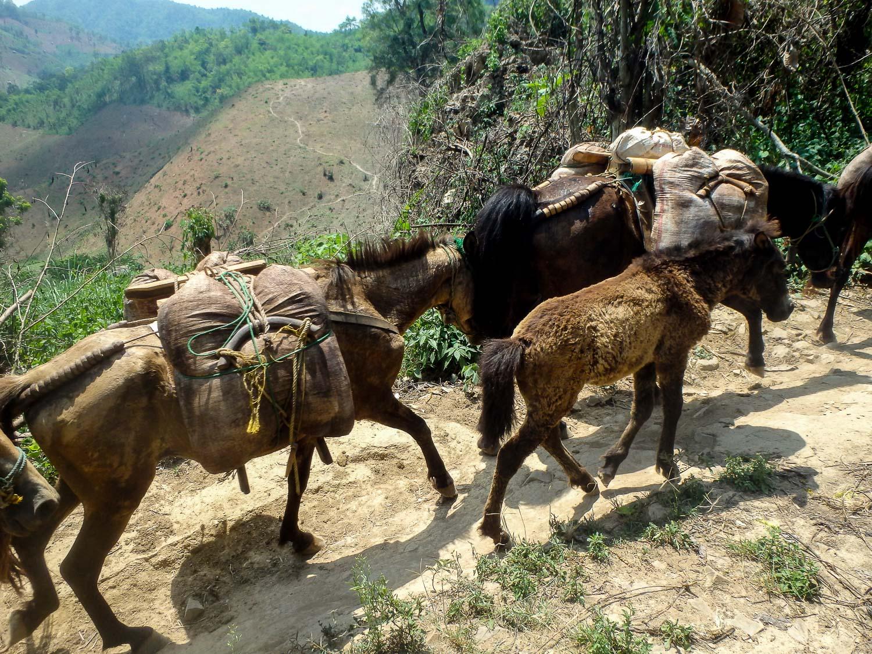 A passing mule train